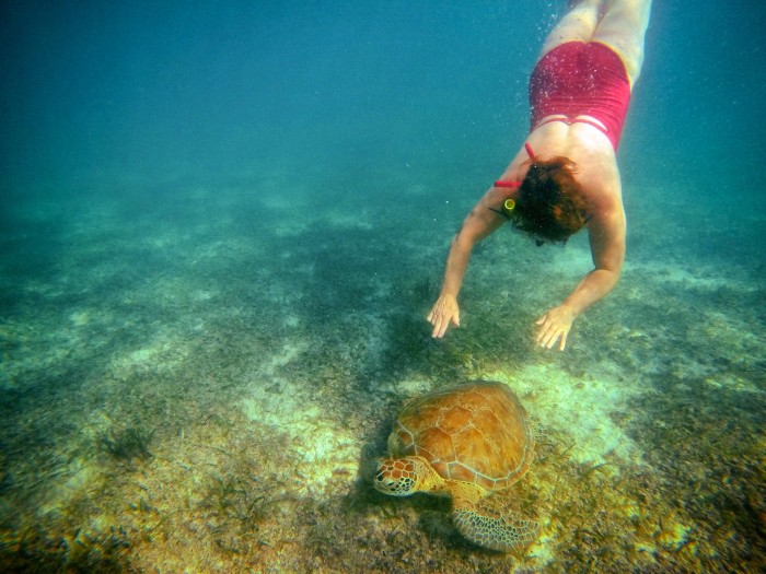 Swimming with sea turtles. Akumal, Yucatan, Mexico.